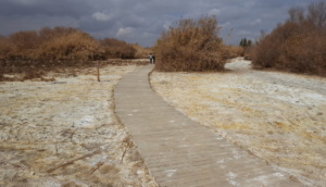 Disaster Risk Reduction and mitigation: green growth in Jordan's humanitarian sector