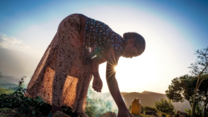 Supporting the World Bank with the development of the GCF proposal for the Ethiopia Resilient Landscapes and Livelihoods Project